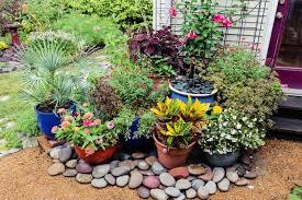 container garden. Container Garden