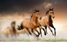 beautiful horses running wallpaper. Wide And Beautiful Horses Running Wallpaper