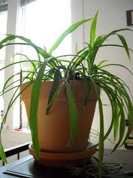 keeping your indoor container plants alive