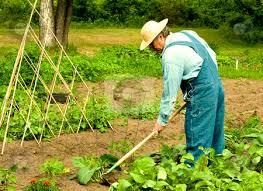 Image result for gardener man