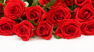 Red Flower Wallpaper Rose Flower Wallpaper Hd Pixelstalk Net