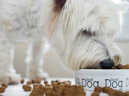 Dog Food Comparison Chart Best Dog Food How To Know Whats Right For Your Dog