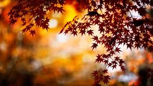 fall background images that you can use