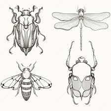 рисунок жук скарабей ручной обращается гравировка эскиз скарабей