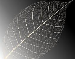 Black White Skeleton Leaf Background For Powerpoint Templates Ppt