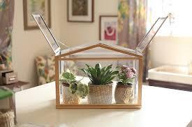 diy mini indoor greenhouse