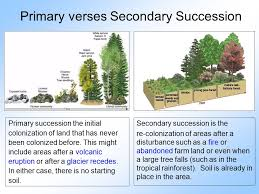 Primary And Secondary Succession Venn Diagram Venn Diagram Primary And Secondary Succession Archives Hashtag Bg