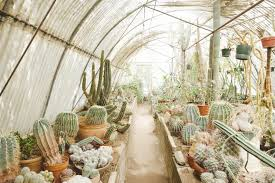 for most of clark moorten s early years he thought that cactus were the only plants on earth he s since realized this is not entirely true but has stayed