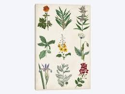 Botanical Chart Print Botanical Chart Ii Canvas Artwork By Vision Studio Icanvas