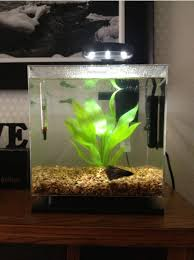 How To Decorate A Betta Fish Bowl Pretty Betta Fish Tank Heaters HOUSE PHOTOS Types Of Bowl 1