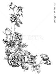 ボールペンで描いたバラのフレーム素材のイラスト素材 34489593 Pixta