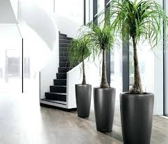 decorative plants for office. Decorative Plants For Office Best Ideas On Inside Garden And Crossword T