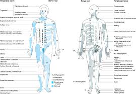 Dermatome Map Morgan Mikhails Clinical Anesthesiology