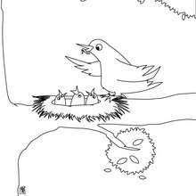 Small Picture Bird in the nest coloring pages Hellokidscom