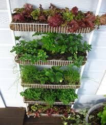 Vertical Kitchen Garden Vertical Gardening Plant A Kitchen Spice Rack Laughing Crow
