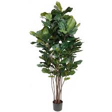 Decorative Indoor Trees Similiar Artificial Fiddle Leaf Fig Tree Keywords