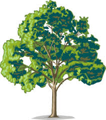 pecan tree clip art.  Tree You All Obviously Love Trees Just As Much I Do And It Was Such A Treat  To Read About Your Favourites Inside Pecan Tree Clip Art