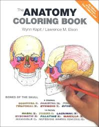 Human Body Coloring Book For Kids Or Body Systems Coloring Pages