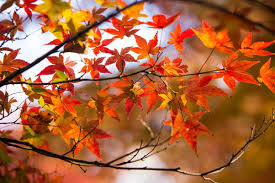Autumn Quotes Delectable Autumn Quotes QuoteAuthors Popular Quotes From Famous Authors