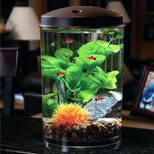 Decorative Fish Bowls Fish Tank Decoration Ideas Fish Bowl Decorations Beautiful Great 99