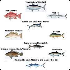 Texas Fish Chart Louisiana Fishing Charters Venice La Saltwater Fishing