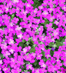 cute flower wallpaper for iphone se 2 awesome purple flowers iphone 6 plus wallpaper flowers iphone cute flower wallpaper iphone 6 flowers healthy