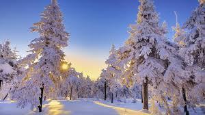 Free Winter Sun Wallpapers