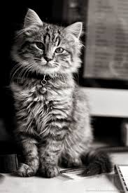 cute cat wallpaper iphone. Perfect Iphone Adorable Animals  My Garden Cat WallpaperIphone  To Cute Wallpaper Iphone