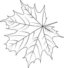 Weihnachtstag Zeichnungs Blumen Weihnachtsstern Anstrich