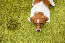 cat and dog urine is bad for your carpet