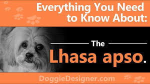 Lhasa Apso Diet Chart The Lhasa Apso A Complete Guide Doggie Designer