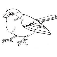 Small Picture Robin Bird Singing in the Morning Coloring Page Color Luna