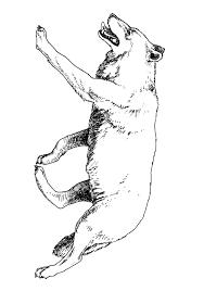 Wolf Kleurplaat Jouwkleurplaten