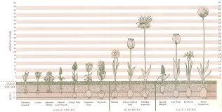 Bulbs Planting Chart