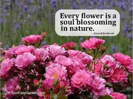 Garden Quotes Adorable Favorite Garden And Nature Quotes Your Easy Garden