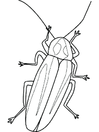 firefly coloring page firefly image coloring page free printable firefly coloring pages