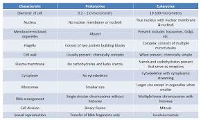 Prokaryote V Eukaryote Table Nuclear Membrane Cell Wall
