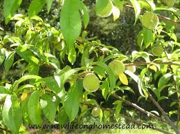 Different Types Of Damages That Fruit Trees Are Facing Its Best Different Fruit Trees
