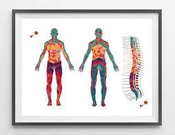 Amazon Com Malertaart Dermatome Map Watercolor Print Spine