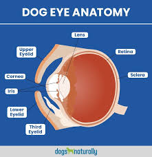 dog and cat eye diagram wiring diagrams value dog and cat eye diagram wiring diagram toolbox dog and cat eye diagram