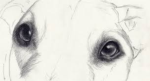 realistic dog drawing step by step. Interesting Drawing Drawing Dog Eyes In Steps Intended Realistic Dog Drawing Step By