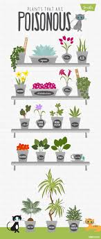 interior design plants safe for cats popular these 12 common are actually poisonous to throughout