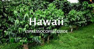 Hyman started the coffee bean & tea leaf® in 1963 with a. Hawaiian Kona Coffee Beans Espresso Coffee Guide
