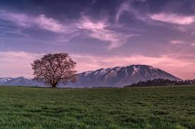 grass field at night. Mountain The Field Grass Tree Night Pink Sky Clouds At