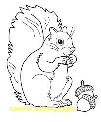 The Best Free Squirrel Coloring Page Images Download From 416 Free