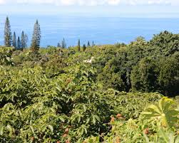 We sell our product exclusively online. Journeys Of Discovery Growing Heavenly Hawaiian Kona Coffee Kcbx