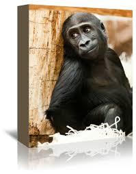 Baby Monkey Ape Animal
