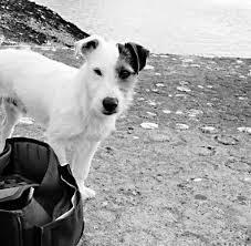 Tod Meines Hundes Jessie Starb An Einem Montagmorgen Im Dezember Welt
