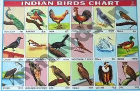 Birds Chart With Names In English
