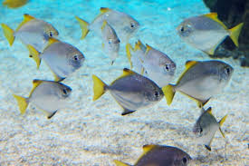 pic of fish. Delighful Pic School Of Fish Free Stock Photos 278MB Throughout Pic Of Fish